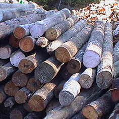 Recycled Timber Specialists
